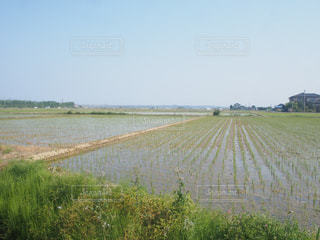 草のフィールドを流れる川の写真・画像素材[1066688]