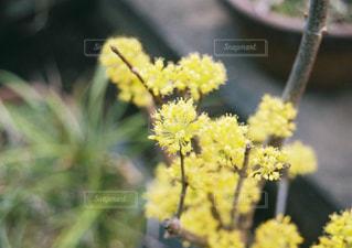 近くの花のアップの写真・画像素材[1066908]