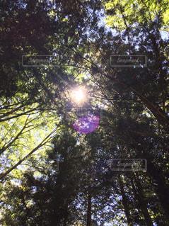 夏の木漏れ日 - No.1066171