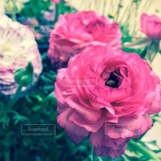 花のアップの写真・画像素材[1077761]