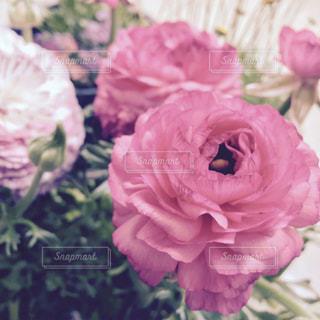 クラシカルな花の写真・画像素材[1077768]