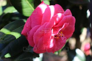 近くの花のアップの写真・画像素材[1065813]