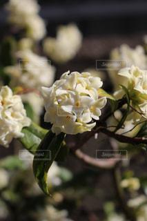 近くの花のアップの写真・画像素材[1065814]