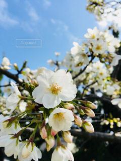 近くの花のアップの写真・画像素材[1075898]
