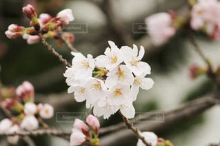 近くの花のアップの写真・画像素材[1077642]