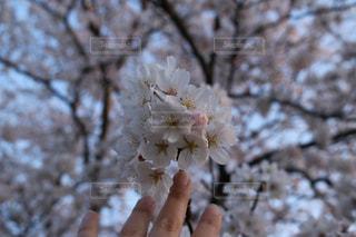 森の植物を持っている手の写真・画像素材[1089943]