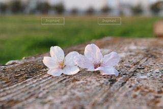 近くの花のアップの写真・画像素材[1090361]