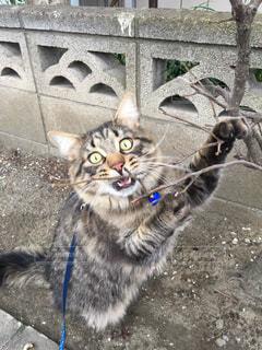 歩道の上を歩く猫の写真・画像素材[1092487]