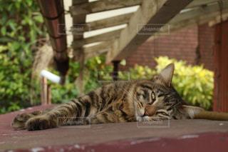 れんが造りの建物の上に横たわる猫の写真・画像素材[1092490]