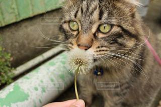 近くに猫のアップの写真・画像素材[1129671]
