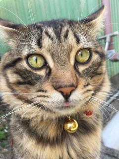 近くに緑の目を持つ猫のアップの写真・画像素材[1170808]