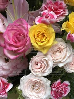 ピンクの花の花束の写真・画像素材[1198924]