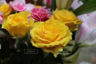 近くの花のアップの写真・画像素材[1199783]