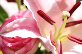 近くの花のアップの写真・画像素材[1200686]