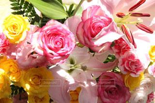 近くの花のアップの写真・画像素材[1200695]