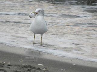 ビーチに立っている鳥の写真・画像素材[1229896]