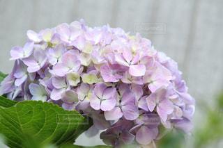 近くの花のアップの写真・画像素材[1253269]
