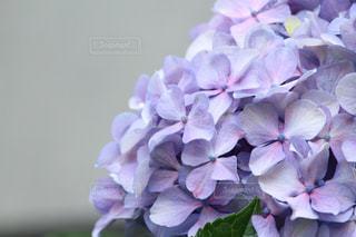 近くの花のアップの写真・画像素材[1253271]