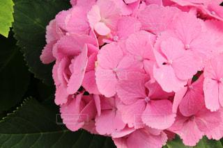 近くの花のアップの写真・画像素材[1255019]