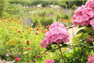 植物にピンクの花の写真・画像素材[1255030]