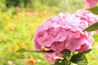 近くの花のアップの写真・画像素材[1255031]