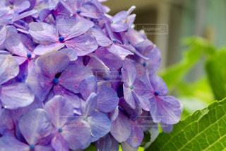 近くの花のアップの写真・画像素材[1265012]