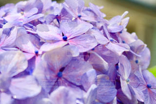 近くの花のアップの写真・画像素材[1265013]