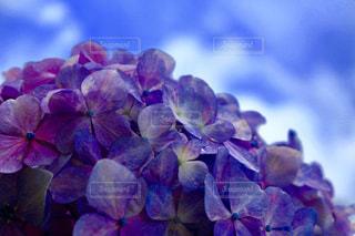 近くの花のアップの写真・画像素材[1265014]