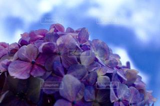 近くの花のアップの写真・画像素材[1265015]