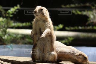 動物の写真・画像素材[1271883]