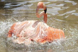 体内の水を泳いでいる人の写真・画像素材[1271885]