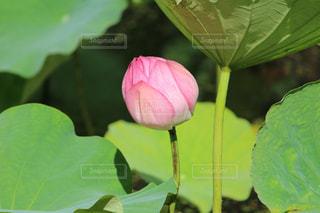 近くの緑の植物をの写真・画像素材[1271887]