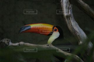 近くに鳥のアップの写真・画像素材[1273415]