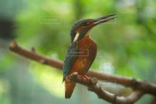 近くの小さな鳥が枝に腰掛けの写真・画像素材[1273417]