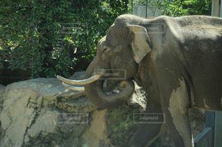 岩壁の横に大きな象立っての写真・画像素材[1273435]