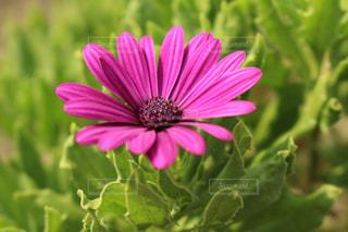 近くの花のアップの写真・画像素材[1325699]