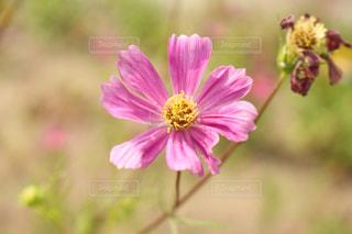 近くの花のアップの写真・画像素材[1325700]