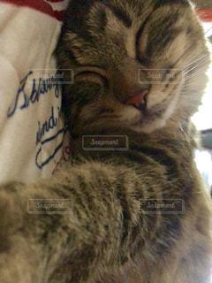 近くに猫のアップの写真・画像素材[1402037]