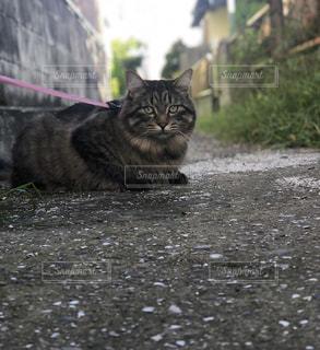 地面に横になっている猫の写真・画像素材[1402047]