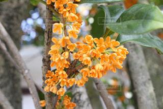 花の写真・画像素材[1418205]