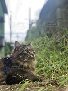 草の上に座って猫対象フィールドの写真・画像素材[1457542]