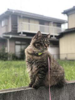 建物の前に座っている猫の写真・画像素材[1503822]