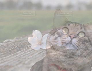 近くに猫のアップの写真・画像素材[1590322]