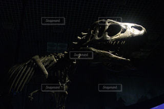 暗い部屋で恐竜の写真・画像素材[1842184]