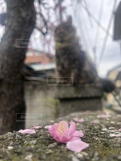 近くの花のアップの写真・画像素材[1880751]