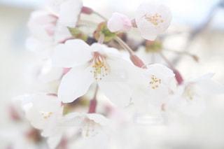 近くの花のアップの写真・画像素材[1882722]