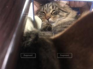 猫の接写の写真・画像素材[2114072]
