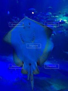 水面下を泳ぐ魚たちの写真・画像素材[1066115]