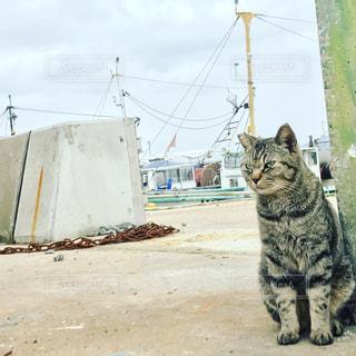 漁港とネコの写真・画像素材[1066148]