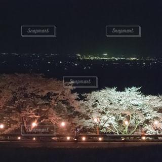 夜桜の写真・画像素材[1094501]